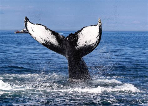 Mexico Whale Watching - Whale Watching in Los Cabos Mexico