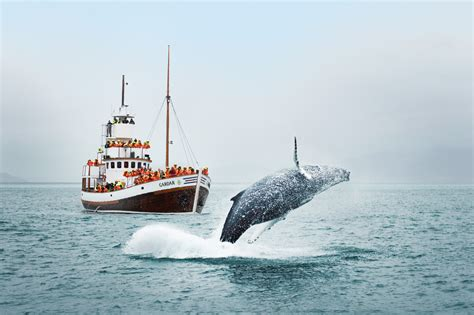 Whale Watching Iceland March: The Season is Beginning